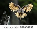 Beautiful Landing Owl In The...