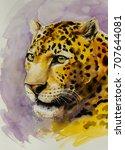 portrait of jaguar  panthera... | Shutterstock . vector #707644081
