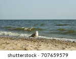 White And Grey Seagull On The...