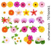 Stock vector collection beautiful flowers isolated on white background vector illustration 70766461