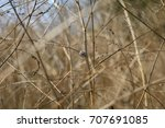 closeup dry grass as background ... | Shutterstock . vector #707691085