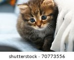 Stock photo kitten 70773556
