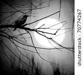 Crow On A Branch In Moonlight