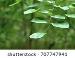 Green round leaves on a branch hangs gracefully framing open copy space.