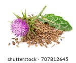 Silybum Marianum  Milk Thistle...