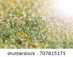 fresh green grass with dew... | Shutterstock . vector #707815171