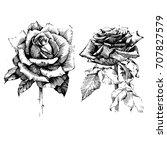 set roses ink drawing flower... | Shutterstock .eps vector #707827579