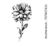 chrysanthemum ink drawing... | Shutterstock .eps vector #707827621