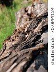 tree trunk texture | Shutterstock . vector #707844124