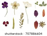 Dried flowers and herbarium...