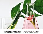 natural organic extraction and... | Shutterstock . vector #707930029