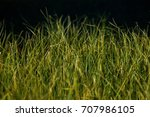 tall grass  | Shutterstock . vector #707986105