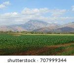 corn fields. | Shutterstock . vector #707999344