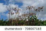 hedgerow seed heads outlined