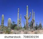 Group Of Saguaro Cactus Against ...