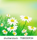 a glade of chamomile   Shutterstock .eps vector #708030934