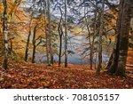 Lake View Through Autumn Tree ...