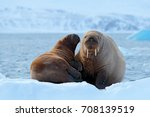family on cold ice. walrus ... | Shutterstock . vector #708139519