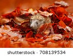 Autumn Orange Leaves With...