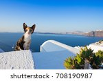 Close Up Of Cat On Santorini...