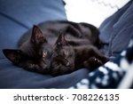 Two Cute Black Kittens Lie...