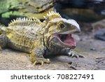 picton  new zealand   march 26  ... | Shutterstock . vector #708227491