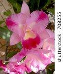 pink orchids   Shutterstock . vector #708255
