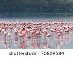 Flocks Of Flamingo. Lake Nakuru ...