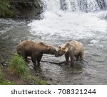 mother brown bear nuzzling her... | Shutterstock . vector #708321244