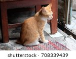 an orange kitten at door  | Shutterstock . vector #708339439