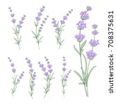 set of lavender flowers... | Shutterstock .eps vector #708375631