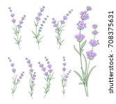 set of lavender flowers...   Shutterstock .eps vector #708375631