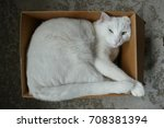 Stock photo white cat in cardboard box from above 708381394