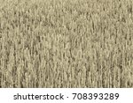 growing ears of wheat and rye ... | Shutterstock . vector #708393289