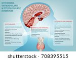 hypophysis  pituitary and... | Shutterstock .eps vector #708395515