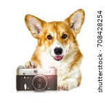 dog and camera on a white... | Shutterstock . vector #708428254