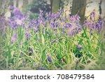 bright bluebells growing on an... | Shutterstock . vector #708479584