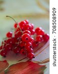 Small photo of red currant