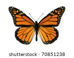 Butterfly  Monarch  Milkweed ...