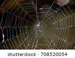 spider web | Shutterstock . vector #708520054