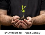 young plant on soil in a hand... | Shutterstock . vector #708528589