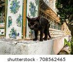 Black Cat On Stone Wall.