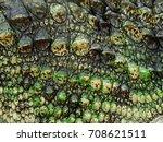 Crocodile Skin With Moss Texture