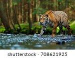 wildlife scene with wild cat in ... | Shutterstock . vector #708621925
