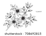 hand drawn and sketch clematis... | Shutterstock .eps vector #708692815