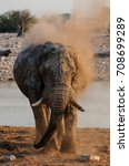 African Elephant Have A Dust...
