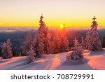 Fantastic Orange Winter...