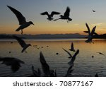 Some sea gulls in the evening - stock photo