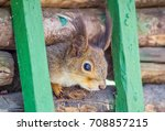 squirrel sitting on a branch... | Shutterstock . vector #708857215