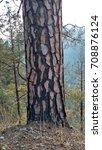 tree trunk | Shutterstock . vector #708876124